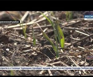Аграрии Чувашии подсчитывают убытки. В республике погибли почти 60% озимых