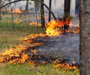 Не допускайте  лесных  пожаров